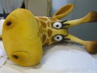 La tête de la girafe.