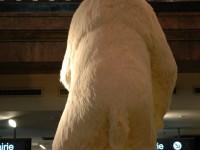 l'ours en place au Virgin mégastore des Champs Elysées