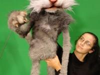 Le chat, manipulé par Annaic Penon