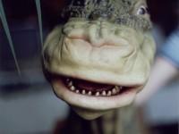 Une marionnette de brontosaure en mousse de latex