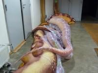 tentacules en cours de construction ...